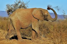 Madikwe Game Reserve, North West, South Africa | by South African Tourism Game Reserve, African Elephant, North West, Elephants, Animal Kingdom, Places To See, South Africa, Beast, Tourism