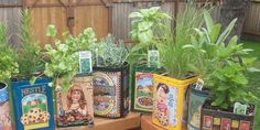 growing herbs in vintage aluminum and tin containers.