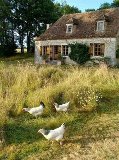 21 Amazing French Country Cottage Decor Amazing French Country Cottage Decor 42 The post 21 Amazing French Country Cottage Decor appeared first on Architecture Diy. French Country Cottage, French Country Decorating, Country Life, Country Style, Cottage Style, Country Living, Farm Cottage, Cottage Decorating, Cottage Gardens