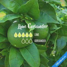 Lime Coriander - Essential Oil Diffuser Blend