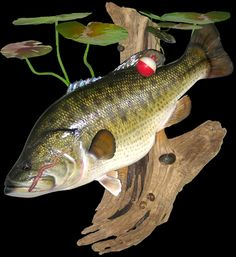 Largemouth Bass Mounts by Marine Creations Taxidermy
