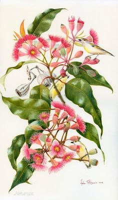 Eptychocarpa by Helen Fitzgerald Australian Wildflowers, Australian Native Flowers, Botanical Flowers, Botanical Prints, Plant Illustration, Botanical Drawings, Watercolor Flowers, Watercolour, Fauna