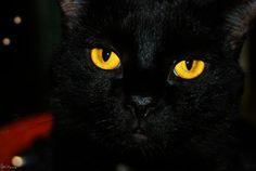 Alchemy #cats #blackcats #photography by Clarissa Johal