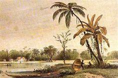 Benoit in Suriname - Een plantage aan de Surinamerivier