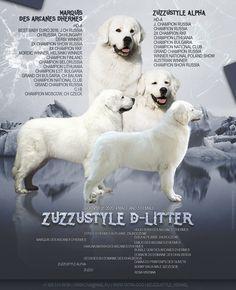 Hi, World, we are born! 7 puppies - 4 bous and 3 girls. Shepherd Dog, Finland, Labrador Retriever, Polish, Puppies, Girls, Dogs, Animals, Labrador Retrievers