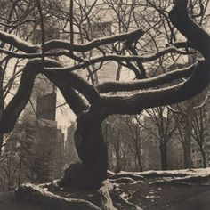 Central Park #14, 2011 from Urban Forests - Central Park platinum and palladium print on gampi 7 1/2 x 7 1/2 inches. Click above to see larg...