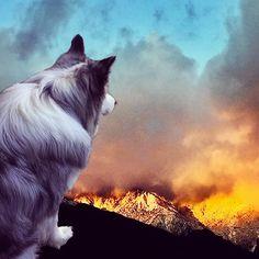 #photoshop Photoshop, Cats, Animals, Custard, Gatos, Animaux, Animales, Cat, Kitty
