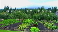 """""""Back to Eden"""" invites you to take a walk with Paul as he teaches you sustainable organic growing methods that are capable of being implemented in diverse climates around the world. Slugs In Garden, Garden Pests, Potager Garden, Crop Rotation, Garden Of Eden, Weed Control, Organic Architecture, Permaculture, Organic Gardening"""