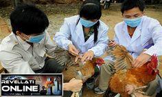 Gripe aviária tem chances de virar pandemia similar a espanhola