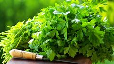 11 lecivych bylinek pro pestovani doma
