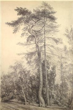 JOHN CONSTABLE  This is one of his tree drawings made of Hampstead Heath.