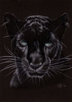 Black Panther 14 Jaguar Big Cat Pencil Painting Sandrine Curtiss Art ...