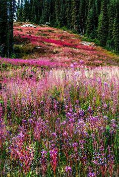 ***Sunshine Meadows (Banff, Alberta) by SilentWave on 500px ff.c.