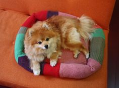 upcycled sweater dog bed for my favorite Pomeranian, Tia!