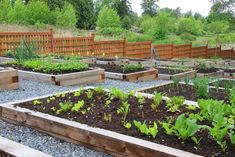 How to Grow All The Food You Need In Your Backyard – Homestead Handbook | Gardening and Survival Ideas by Pioneer Settler at http://pioneersettler.com/homestead-handbook-grow-all-the-food-you-need-in-your-backyard/