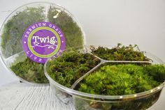 Fresh Moss from Twig.