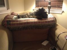 Duchess laying under lamp.
