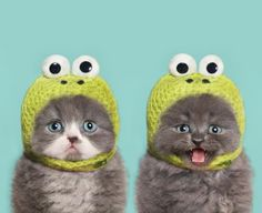 Celebrate National Cat Day With 19 Photos Of Cats Wearing Clothes - AWW - - Awwe! The post Celebrate National Cat Day With 19 Photos Of Cats Wearing Clothes appeared first on Gag Dad. Cute Kittens, Cats And Kittens, Cats In Hats, Black Kittens, Kittens Meowing, Fluffy Kittens, Cats Bus, Baby Animals, Funny Animals
