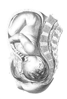 Free Antique Baby Image ~ perfect for newborn scrapbooks, birth announcements, nursery/OBGYN office decor, or even transferred on to a T-shirt for a pregnant friend! Birth Art, Pregnancy Art, Medical Art, Baby Images, Anatomy Art, Medical Illustration, Midwifery, Maternity Pictures, Art Inspo