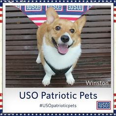 Here's a snap of one of our furriest supporteres, Winston, supporting our troops via the #USOpatrioticpets hashtag.