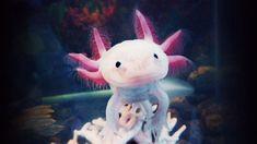 Axolotl - Buscar con Google