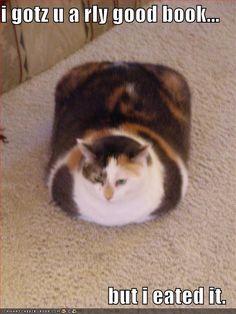 Funny cat pics » funny-pictures-fat-cat-ate-book - Keeping your cat healthy Catsincare.com!