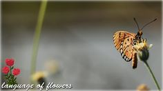 the most beautiful butterfly for you /Butterflies and flowers