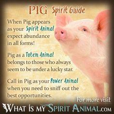 Pig Spirit, Totem, & Power Animal Symbolism Meaning 1200x1200