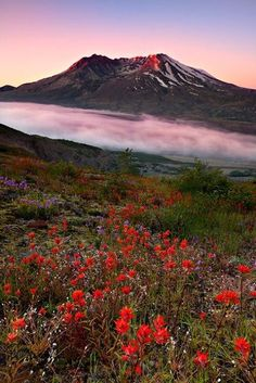 Mount St. Helens is an active stratovolcano located in Skamania County, Washington, in the Pacific Northwest region of the United States. It is 96 miles south of Seattle, Washington, and 50 miles northeast of Portland, Oregon.