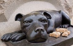 """Sallie rests at the foot of the 11th PA infantry monument in Gettysburg. Sallie was a brindle pit bull who fought the civil war with the men of her infantry and when many of them were killed and wounded, she was recovered from the scene protecting her dead and dying men."""