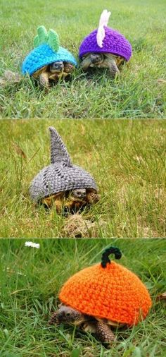 Crochet for turtles. When you really want your turtle to stand out from the crowd!   I don't know where people come up with these ideas but they're great.