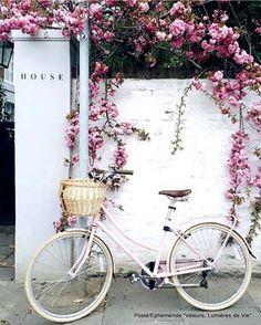 Pin de linda thorson en flowers pinterest flor y flores lookstore guatemala accesorios altavistaventures Image collections