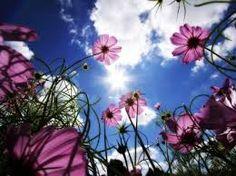 Bilderesultat for flowers nature