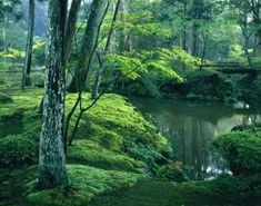 """""""Not thinking about anything is Zen. Once you know this, walking, sitting, or lying down, Everything you do is Zen. Japan In September, Zen, Japanese Garden Design, Moss Garden, Forest Garden, Japan Photo, Kyoto Japan, City Break, Culture Travel"""