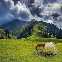 Shogran is located at a distance of 34 km away from Balakot. From Shogran, you can ride a jeep or horse or hike to several places like Siri and Paye meadows. Wonderful Places, Beautiful Places, Amazing Places, Pakistan Travel, Pakistan Tourism, Pakistan Zindabad, Gilgit Baltistan, Belleza Natural, Beautiful Landscapes