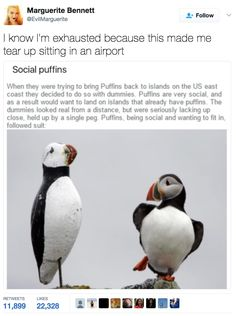 Me as a puffin . You know what on second thought I already am a puffin Cute Funny Animals, Funny Cute, Hilarious, Funny Memes, Logic Memes, Funny Humour, Funny Fails, Animals And Pets, Baby Animals