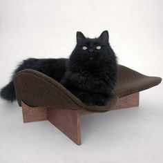 $79 Cat Bed #LikeKittysville #cat #cat bed (lol- look at her face!!)