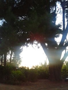 Jardin <3