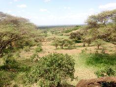 Saturday Social, Amboseli Lodge Viewpoint over The Bush.