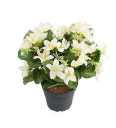 Best for hjemme dekorasjon og Anledning dekorasjon. Plants, Flora, Plant