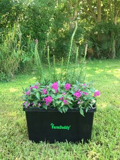 Grow Ornamental Flowers In The FarmDaddy Self Watering Garden Container!