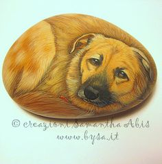 Ritratti di animali bysa: Gatti e cani dipinti su sassi di mare