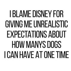 I thought I'd live happily after with 101 dogs. I Love Dogs, Puppy Love, Cute Dogs, Mom Quotes, Funny Quotes, Chihuahua, R Dogs, Doggies, Dog Rules