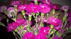 KKK Flowers, Jewelry, Jewels, Schmuck, Jewerly, Jewelery, Jewlery, Royal Icing Flowers, Floral