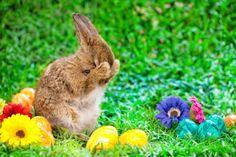 La tradition américaine veut que #Pâques soit alimenté d'histoires de lapins, de cloches et d'oeuf symboles de la fertilité. Si cette tradition est la norme en Amérique, d'autres cultures ont cependant leur propre manière de célébrer la fête de Pâques. Que ce soit en s'aspergeant d'eau en Pologne ou en lisant des romans policiers en Norvège, consultez les 10 traditions de Pâques à travers le monde et leur histoire !!