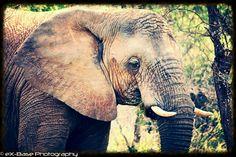 Elephant edit