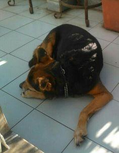 Il mio cane Tattoo disteso al sole nel terrazzino...! :)