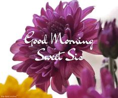 gm-pic-of-roses-for-sweet-sister Good Morning Sister Images, Funny Good Morning Quotes, Good Morning Texts, Good Morning Picture, Good Morning Love, Good Morning Greetings, Morning Pictures, Morning Wish, Morning Sayings