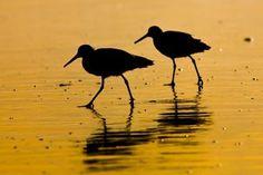 Save Panama's Threatened Bird Habitats PETITION - Care2 News Network