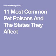 11 Most Common Pet Poisons And The States They Affect
